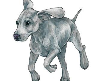 Weimaraner Puppy Greetings Card