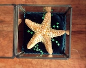 SALE CLEARANCE Art Starfish Ornament Totem Shrine Original OOAK  Ocean Theme Mermaid Gift Reliquary Shadow Glass Box