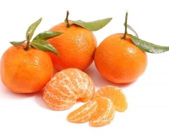 Home Garden Plants 5 Seeds mandarin orange,Citrus  tangerine Fruit Seeds