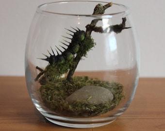 Real Woodland Caterpillar Terrarium - Spiky Caterpillar. Handmade, Ornamental Gift ~