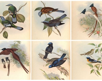 "Six Vintage Bird Prints 8"" X 10"" from the 1800's"