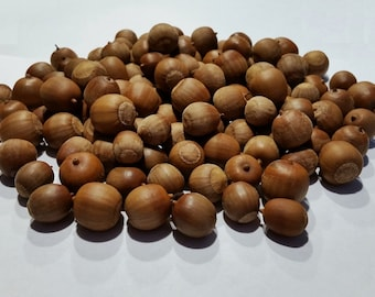 125 Natural Acorns (No Caps) Real Acorns DIY Crafts Christmas Wedding Fall Thanksgiving Holiday Decor Table Decor Centerpiece Table