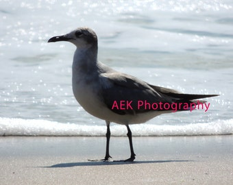 Seagull On Virginia Beach