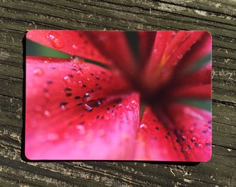 Red Lily photo magnet