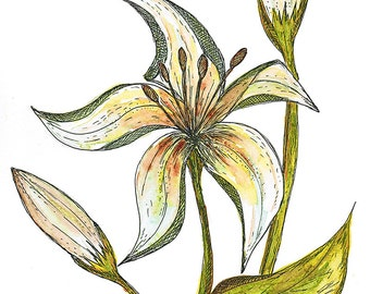 White Lily - MOUNTED, Fine Art Print