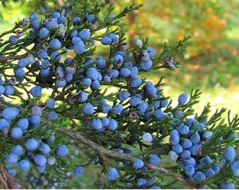 Organic Kosher Ceder Berry's