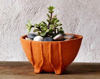Succulent terracotta planter zen pot