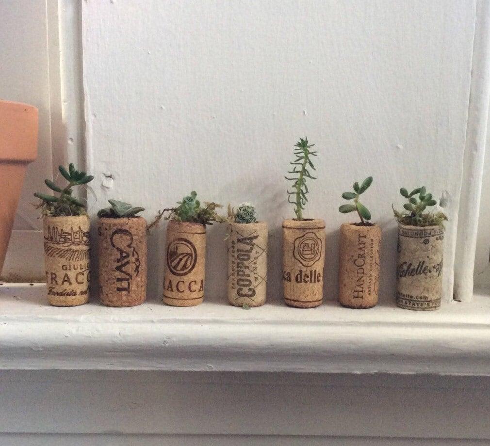 Cork Wedding Favors: Wine Cork Succulent Planter Wedding Favors By