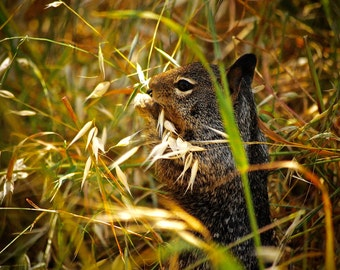 The Ground Squirrel 1