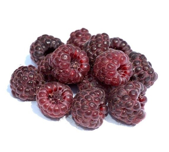 Raspberry Seeds - CRIMSON NIGHT - Medicinal Benefits - 25 Organic Seeds