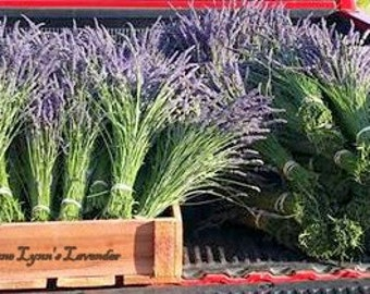 Dried Fresh Lavender Whole Flower Bunches Sustainably Grown Bright Purple