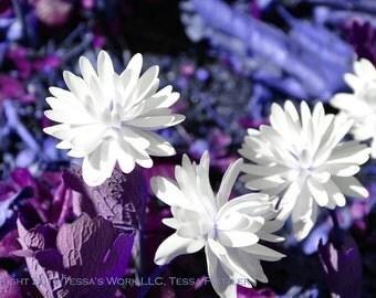 White Flowers in Wonderland 8x10 glossy print