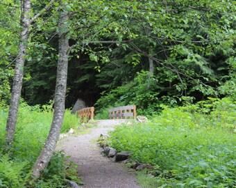 Wooden bridge in the forest, fine art photograhpy, color photo, landscape picture