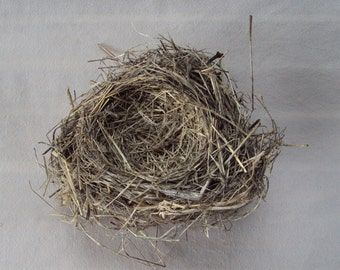Real Bird Nest - Robin - Nature Find