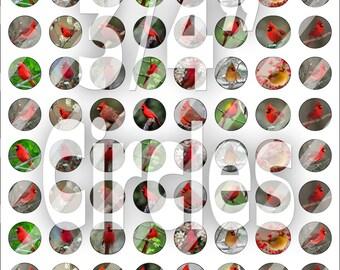 Digital Bottle Cap Collage Sheet -  Cardinals - 3/4 Inch Circles Digital Images for Bottlecaps