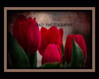 TULIPS,flower,red,spring,textured,four,wall,decor,botany,leaves,green,easter,bulbs,decorative,garden,pots,outdoors,warm,colorful