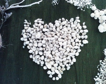 Natural Dry Baby's Breath Small,Dry Gypsophila ,Flowers Dried 100% Natural Perfect for craft