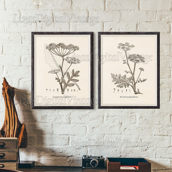 Set of 2 art prints, Printable botanical set, Floral print set, Vintage botanical wall art, Antique print, 8x10 wall art, 11x14, A3 JPG