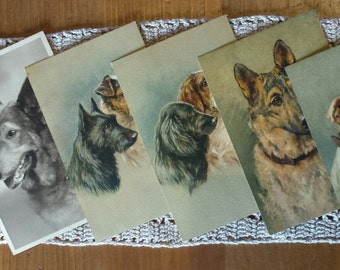 Lot 6 postcards with painted dogs and vintage photos