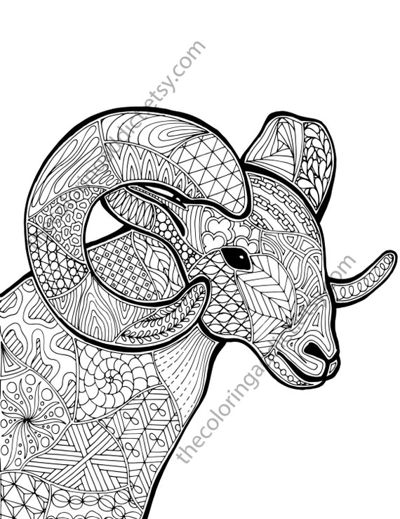 ram sheep coloring sheet animal coloring pdf zentangle