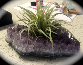 Gold Dipped Amethyst with Airplant