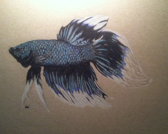 Veiltail Betta Fish Drawing