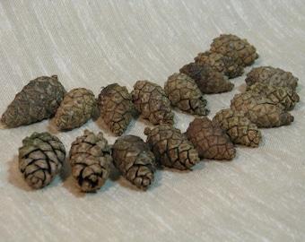 Real 100% Natural Pine Cones