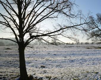 1 - Winter landscape