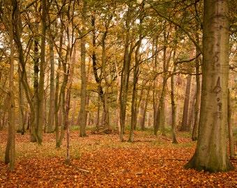 Autumn forest (digital download)