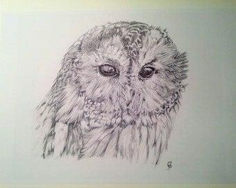 Owl Art - Fluffy Owl Detailed Owl Portrait (Print)