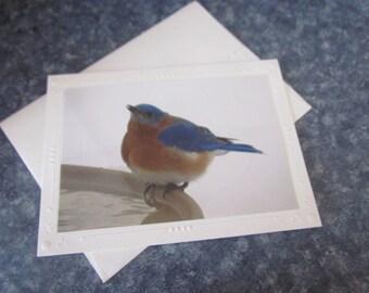 Handmade Note Card Eastern Bluebird Photo