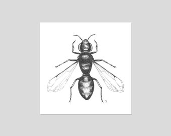 Bumble Bee Black and White Illustration Print