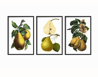 French Pears Botanical Vintage Print Set Giclee Canvas Art Antique Fruit Prints Wall Art Prints and Posters Illustration Vintage Botanical