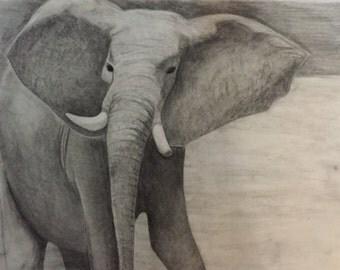 Charcoal Elephant drawing