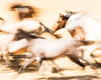 SPANISH HORSES 3. galloping horses, andalucian horses, photographic print, limited edition print
