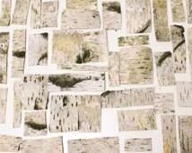 50 Natural birch bark sheets birch bark craft birch wood sheets birch straps strips wooden wedding rustic decoration supply centerpieces