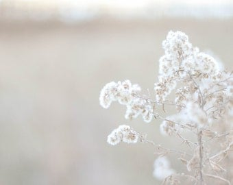 Light Pastel Flower Cluster Field Photo Print, Fine Art Photography