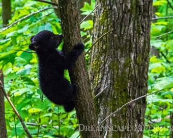 black bear decor | etsy