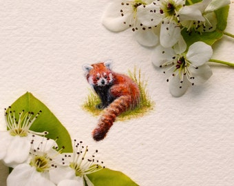 Original miniature watercolor painting of a Red Panda.