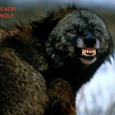 beachwolfvintage