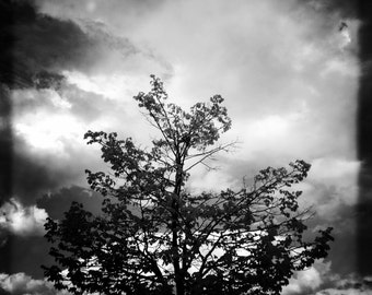 A Tree in New England