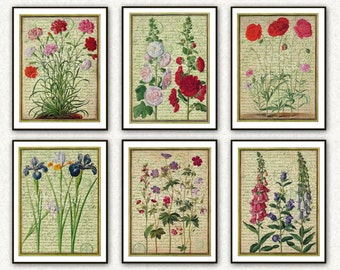 Antique French Flower Print Set of 6 French Handwriting Botanical Prints Floral Shabby Cottage Chic Home Decor Fine Wall Art Decoration 034