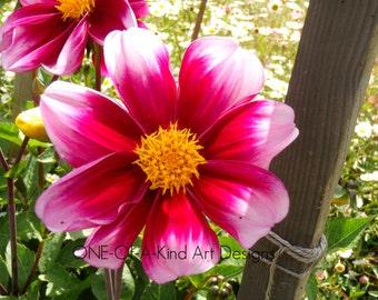Beautiful Pink Flower Photograph
