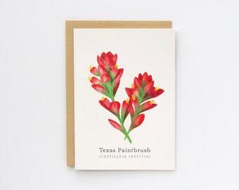 Texas Indian Paintbrush   Handmade Blank Greeting Card   Botanical Drawing   Wildflowers   Flowers   Color Pencil   Art Print