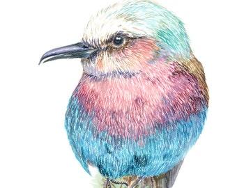 Original Watercolor Lilac Breasted Roller Print
