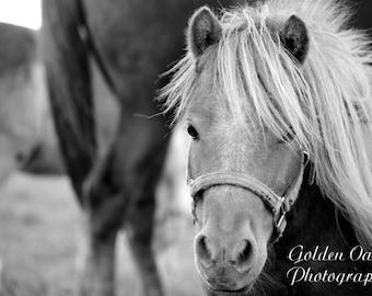 Pasture Pony