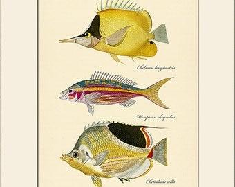 Vintage Fish Print #102, Art Print with Mat, Note Card, Natural History Illustration, Costal, Wall Art, Nautical Art, Sea Life, Wall Decor
