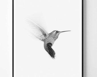 Bird print, Colibri Print, Colibri Photo, Minimal decor, Bird Wall Art, Minimal art, Minimalist Print, Scandinavian Printable Art, Modern