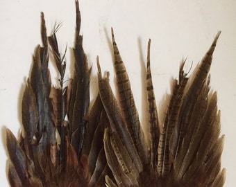 Pheasant feathers bundle