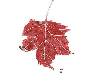 Maple Leaf #2